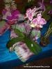 Exposição de Orquídeas 02/09/2011